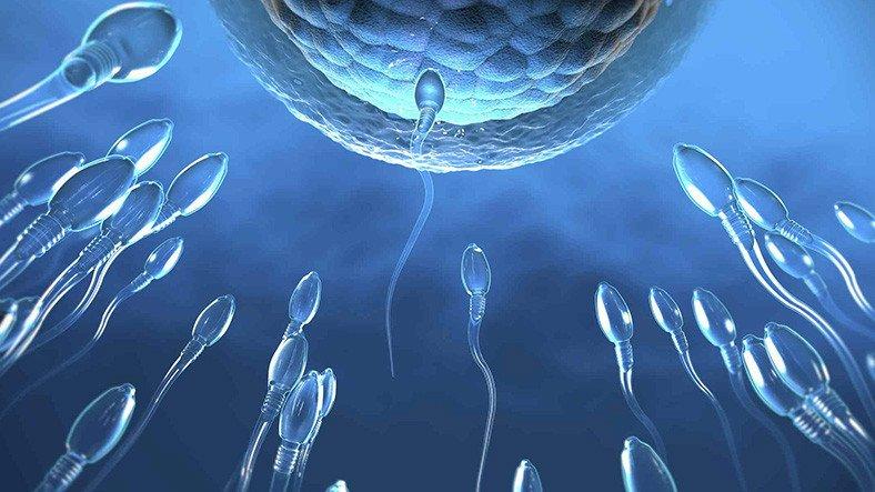 Covid-19 Aşısının Spermlere Zarar Vermediği Açıklandı
